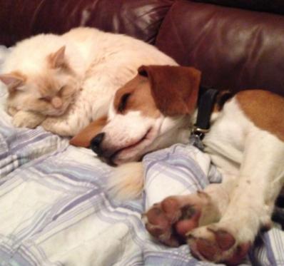 Cat & Dog asleep friends