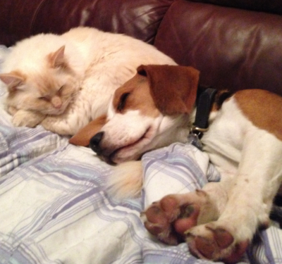 Cat & Dog asleep friends dreams