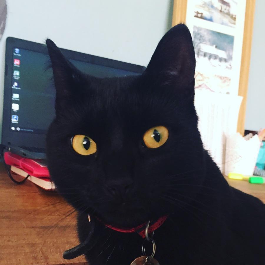 Lorraine Ambers Writer cat