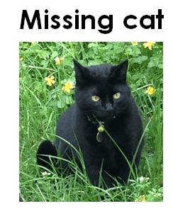 Missing cat,