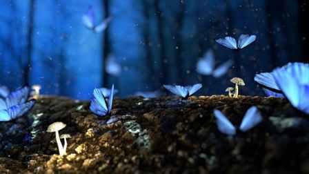 Inspiration butterflys Pexel-image