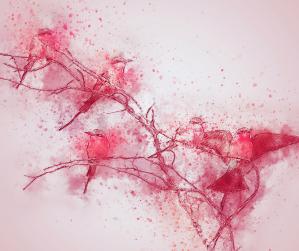 Art, pink, birds